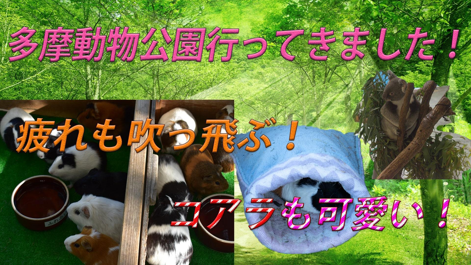 多摩動物公園に行ってきました!モルモットの〇〇がズボンに。。