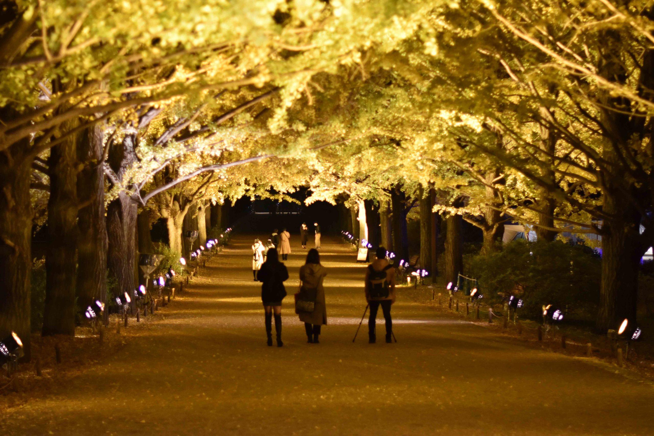 桜田神谷『Kamiya』とは何なのだろう?